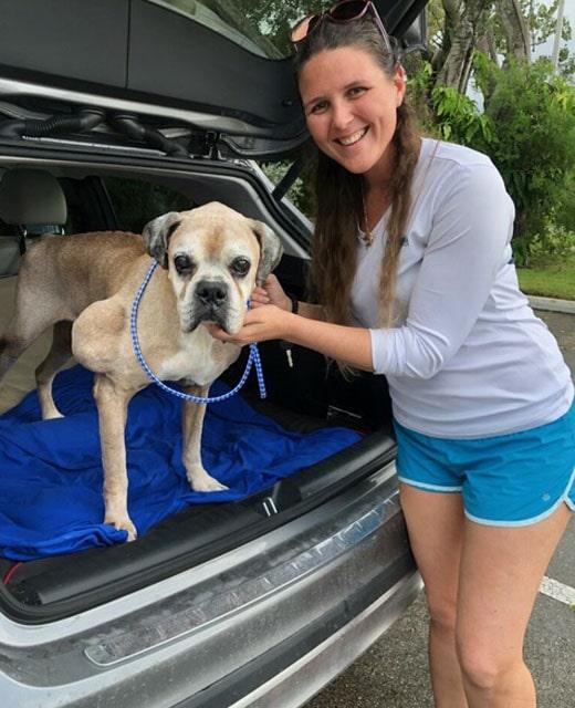 Coastal Boxer - Big dog